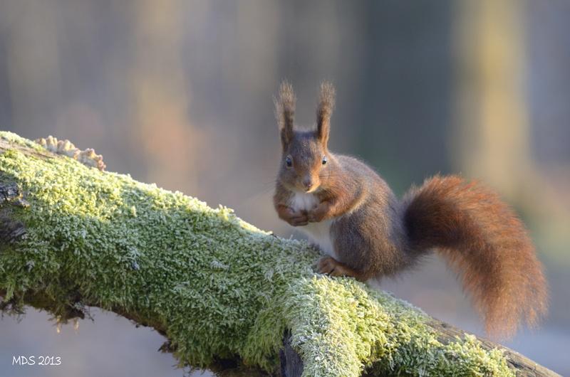 écureuils-41